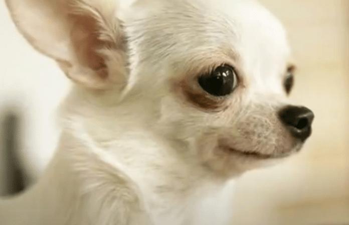 'Our shelter is bursting': North Myrtle Beach businesses sponsor pet adoption fees